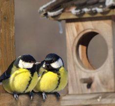 На Львівщині за підгодовування птахів обіцяють подарунки