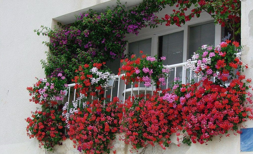 """Результат пошуку зображень за запитом """"гарний балкон з квітами"""""""