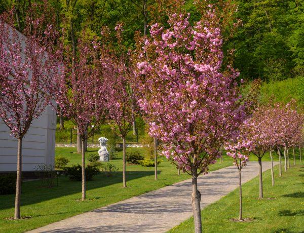 """Весняне цвітіння дендропарку Санаторного Комплексу """"Деренівська Купіль"""" вабить своєю красою"""
